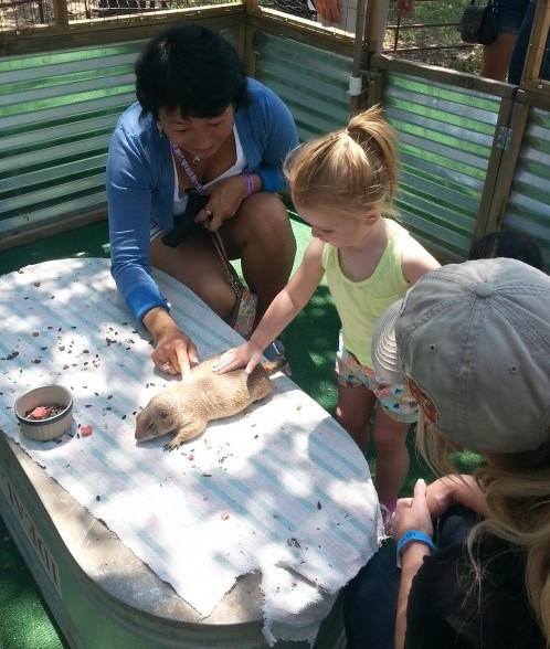 Mobile Petting Zoo in San Antonio TX