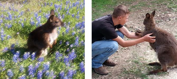 Petting Zoo Animals in San Antonio TX